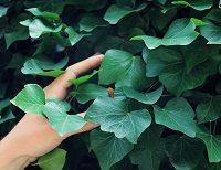 Kodeks dobrych praktyk w ogrodnictwie