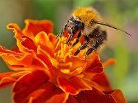 NIK chce pomóc polskim pszczołom