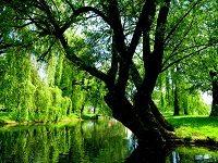 Kontrowersyjny projekt nowelizacji ustawy o ochronie przyrody