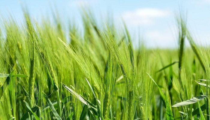 Ekologiczne rolnictwo w UE