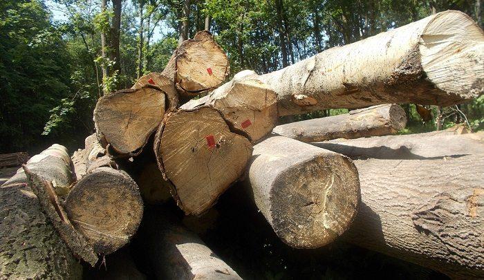 Nowe stawki opłat za usunięcie drzew i krzewów
