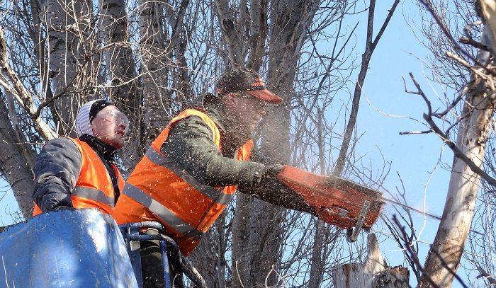 Będzie zmiana przepisów dotyczących wycinki drzew