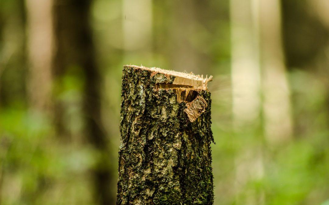 Zmiany w sprawie wycinki drzew na terenach zabytkowych