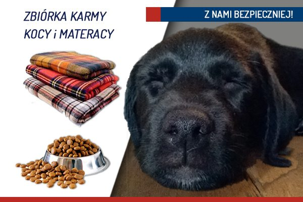 karma i koce dla psów
