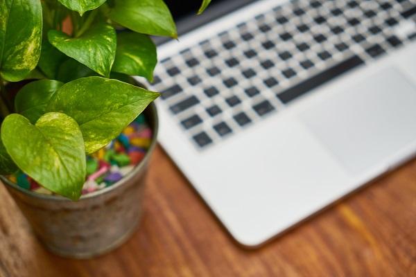 Rośliny w biurze? Jak najbardziej