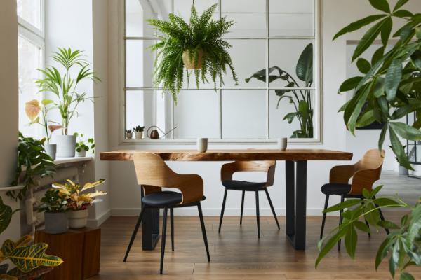 Dbaj o zdrowie, dbając o rośliny – w pracy i w domu